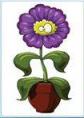pixwords Květina